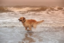 Cape May pet friendly vacation rentals