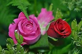 roses-208980__180